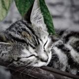 Was tun wenn man nicht schlafen kann
